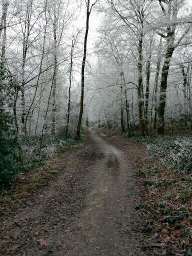 1 - La forêt