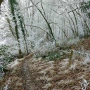 2 - La forêt